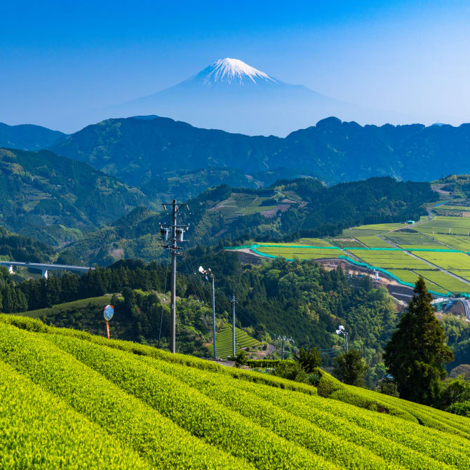 Homestays, Farmstays and WWOOFing in Japan