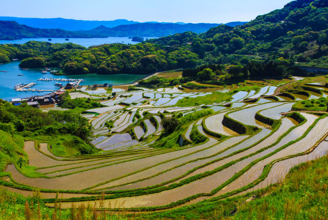 Terraced Rice Fields at Oura