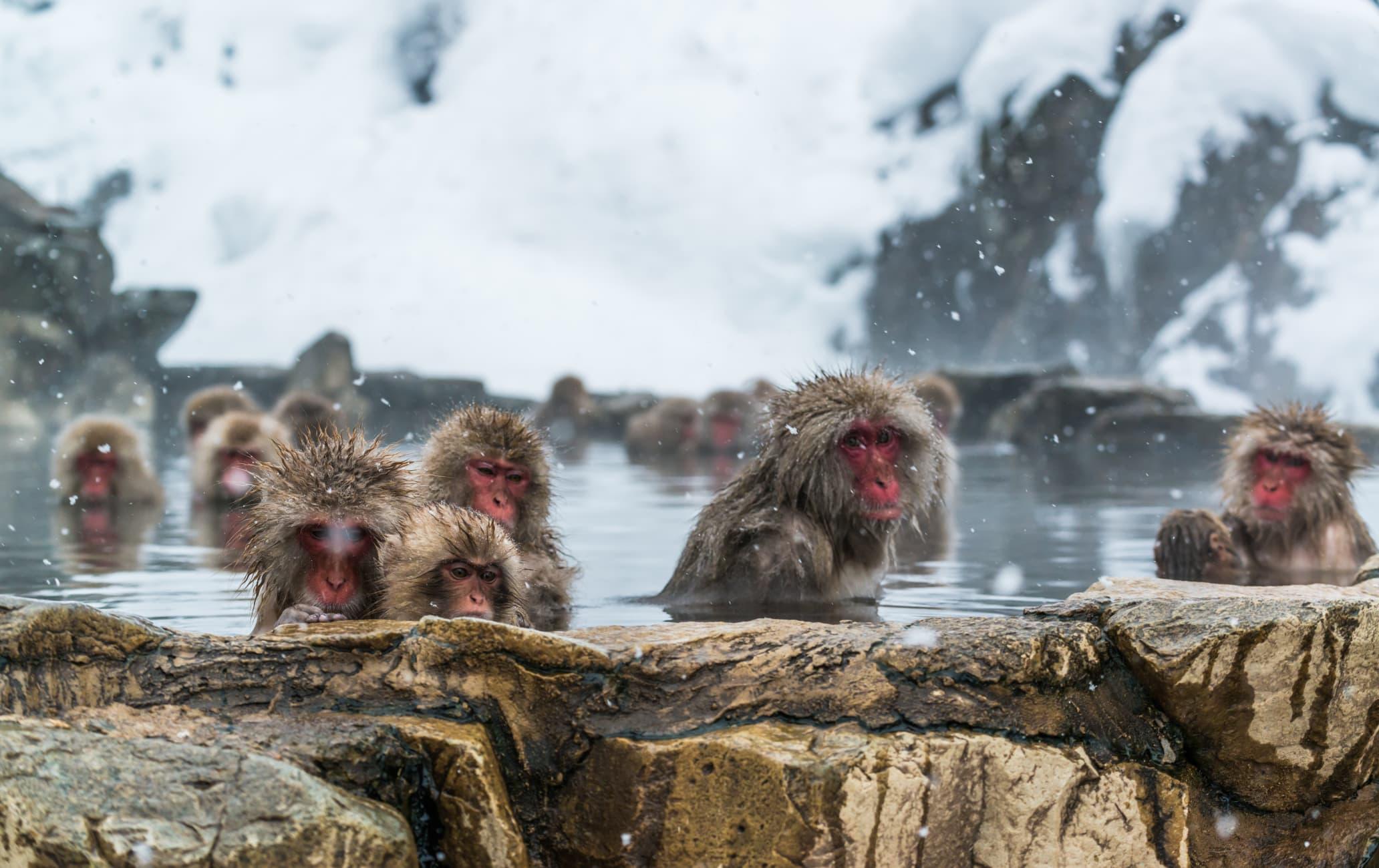 Парк снежных обезьян Дзигокудани