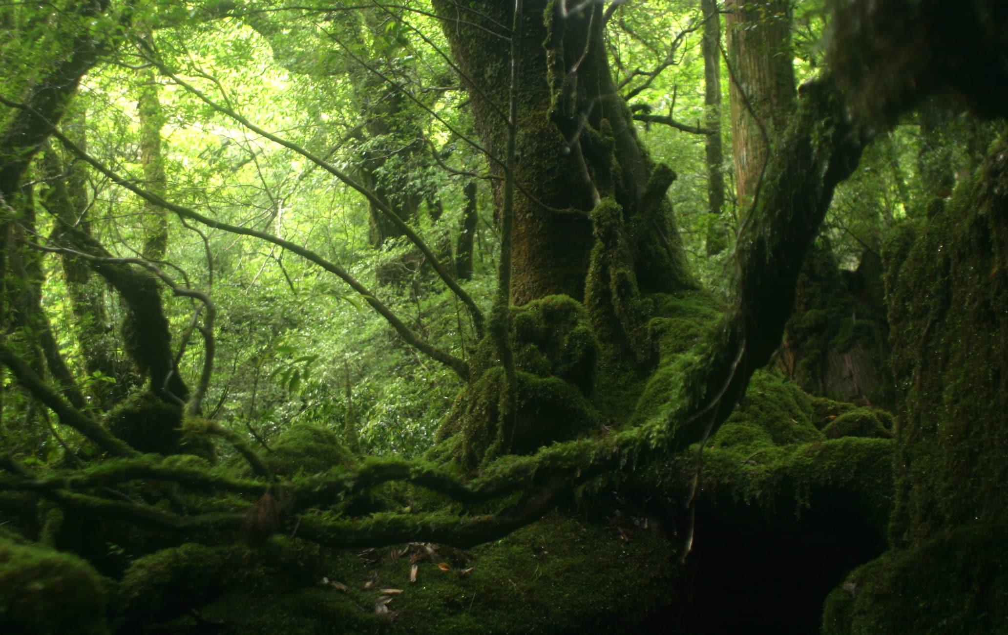 Iko-ji Teien Garden
